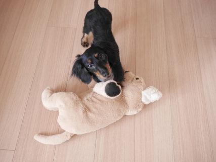 <犬との暮らし>犬の幼稚園に通った感想・人間と犬が学んだ内容。