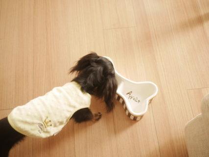 <犬との暮らし>犬ペットフードの選び方