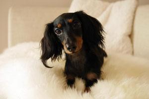 <犬との暮らし>犬用リンスインシャンプー・自然派など色々使ってみて行き着いた商品