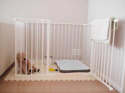 <犬との暮らし>ペットシート・吸収力で選ぶ私のBEST3